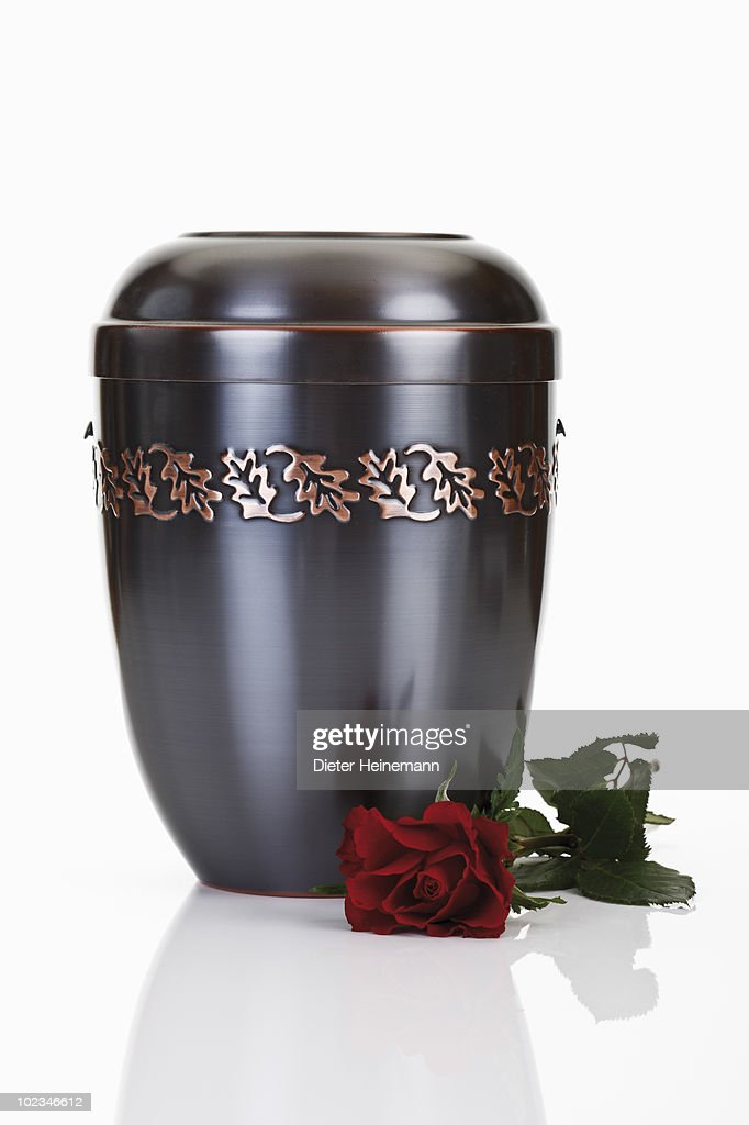 Cremation urn and red rose against white background