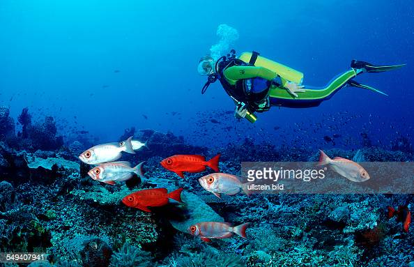 Crescenttail bigeye and scuba diver Priacanthus hamrur Indonesia Indian Ocean Komodo National Park