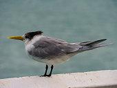 Australian animal bird