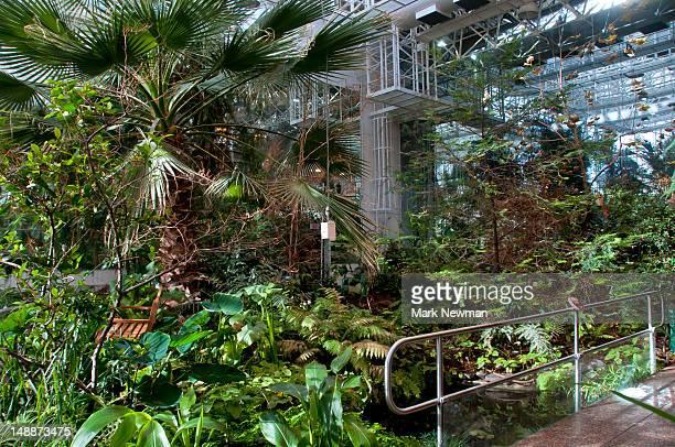 'Cretaceous Garden' at Royal Tyrrell Dinosaur Museum.