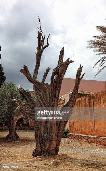 Crete cloister of Arkadi the bullet tree in the cypress trunk in the cloister inner courtyard is one bullet from the big battle of 1866