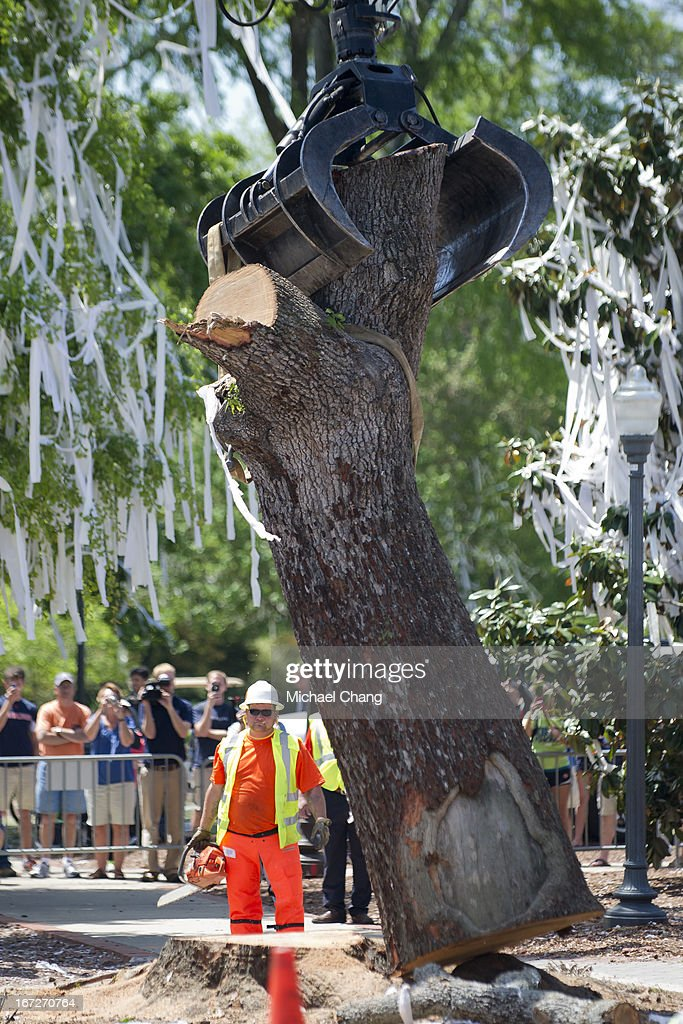 Crews from the Asplundh tree service cut down an oak tree on April 23, 2013 at Toomer's Corner in Auburn, Alabama. Auburn University decided to remove the dying oaks after they were poisoned by a rival fan shortly after the 2010 Iron Bowl.