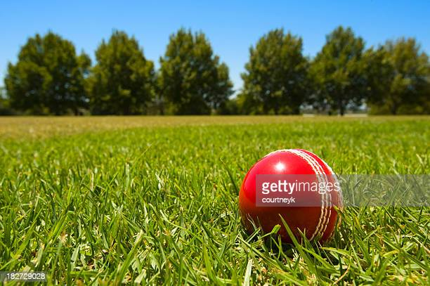 Cricket ball in green grass with blue sky and tree