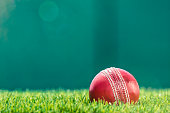 A red Cricket Ball sitting in the grass of a stadium with a green wall in the background and the afternoon sun shining down.