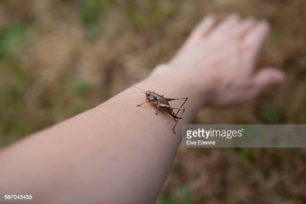 A cricket on a human arm (POV)