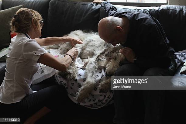 Cris Cristofaro holds his dog Dino as veterinarian Wendy McCulloch injects a sedative while performing an inhome pet euthanasia on May 9 2012 in New...
