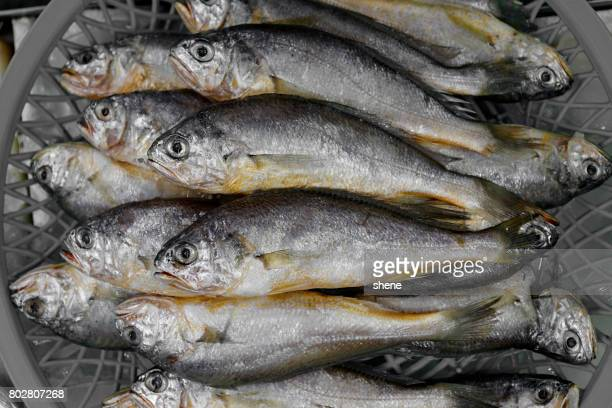 Croakers in the Seafood Market