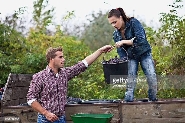Croatia, Baranja, Young man and woman in vineyard