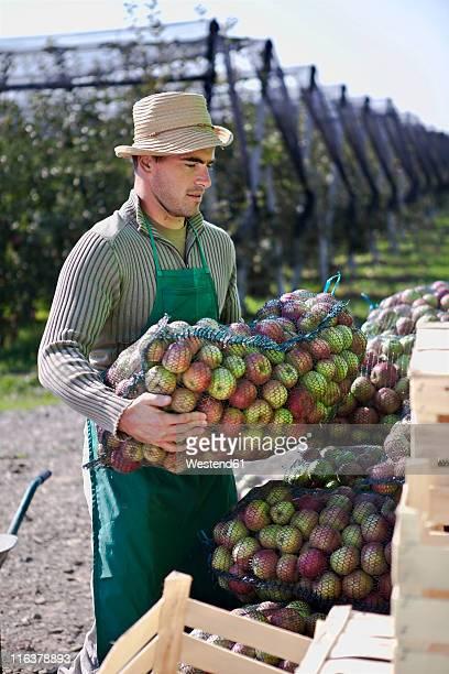 Croatia, Baranja, Young man holding apples in net bag