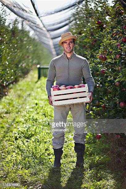 Croatia, Baranja, Young man with apple crate in apple orchard