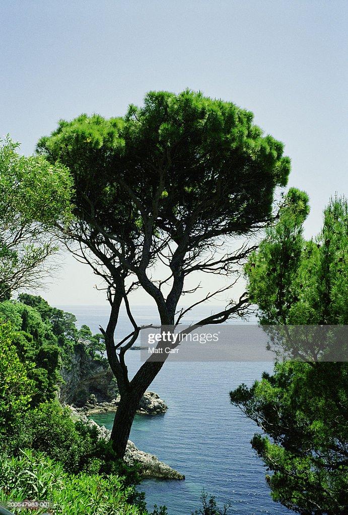 Croatia, Dubrovnik, view of the Adriatic Sea : Stock Photo