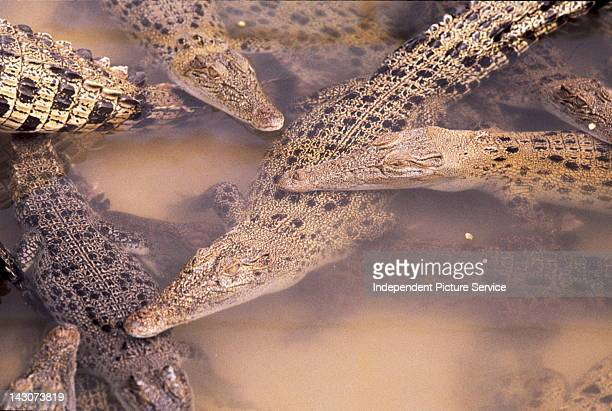 Crocodile Farm Australia