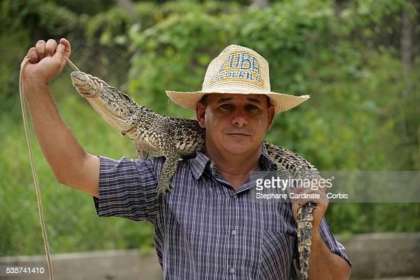 A crocodile farmer in Matanzas Province holding a baby crocodile | Location Matanzas Cuba