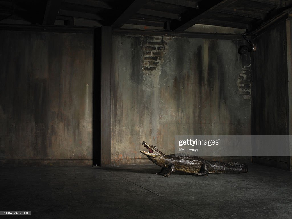 Crocodile in warehouse, side view : Stock Photo