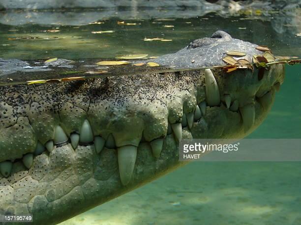 Perfil de cocodrilo