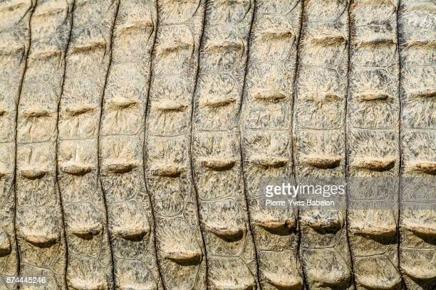 Crocodile skin pattern
