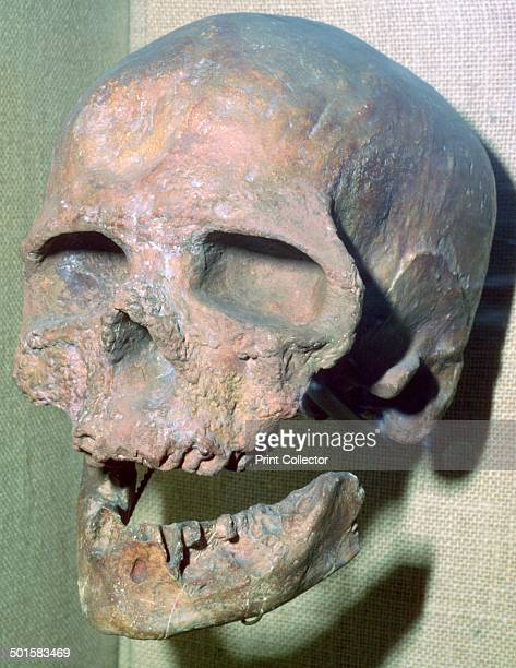 A Cromagnon skull from France