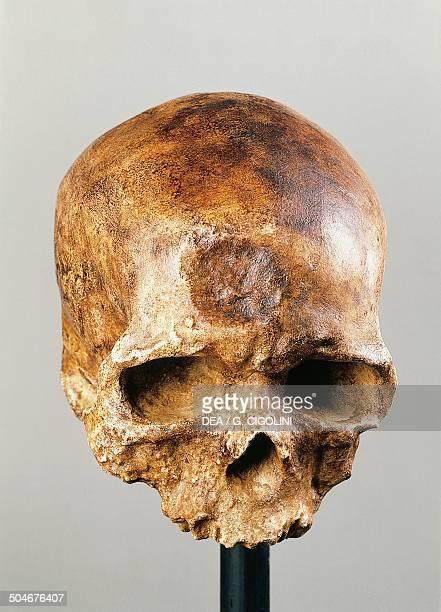 CroMagnon skull frontal view