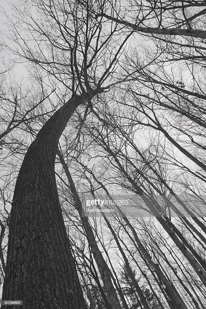 Crooked Tree : Stock Photo