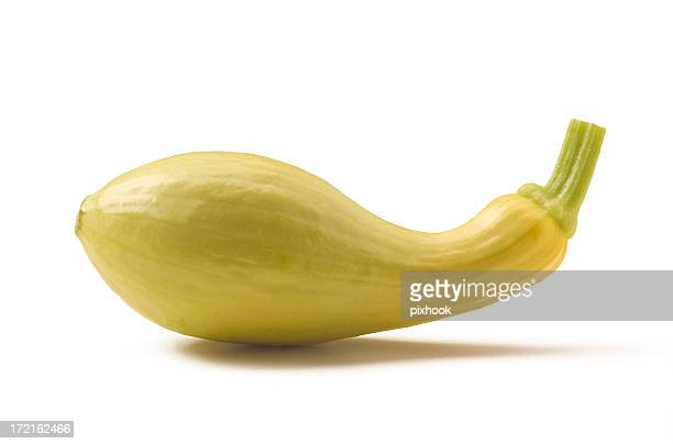 Crookneck Squash with Path