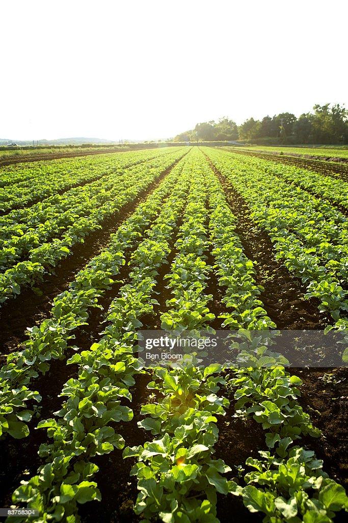 Crop Fields : Stock Photo