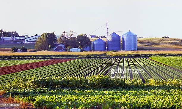 Crop Rows I