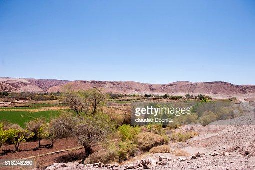 Cropland in San Pedro de Atacama : Stock Photo