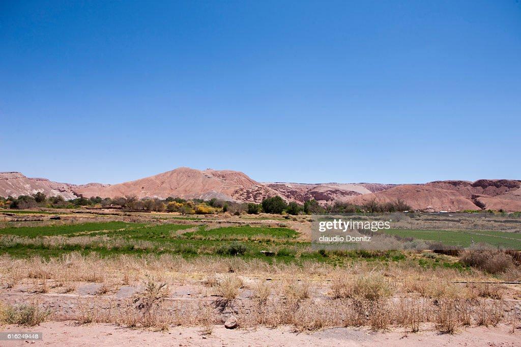 Cropland in San Pedro de Atacama : Stock-Foto