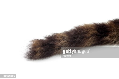 Cropped cat tail isolated on white