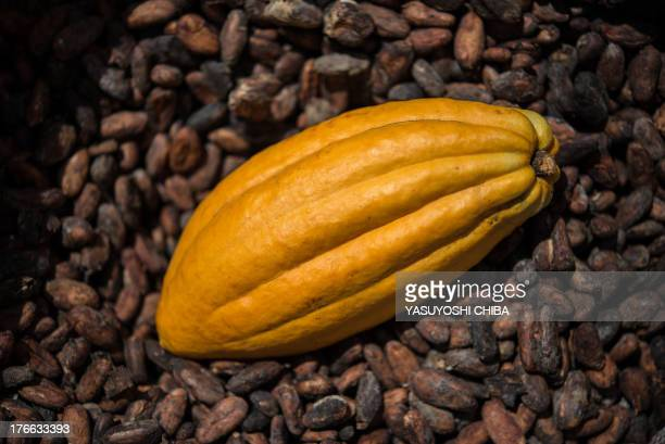 A cropped cocoa pods lies over dried cacao beans in a farm in Sao Felix do Xingu Para state northern Brazil on August 7 2013 AFP PHOTO / YASUYOSHI...