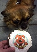 Cropped Hand Feeding Chihuahua With Birthday Cake