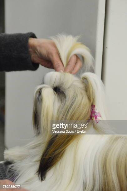 Cropped Hand Grooming Dog During Show