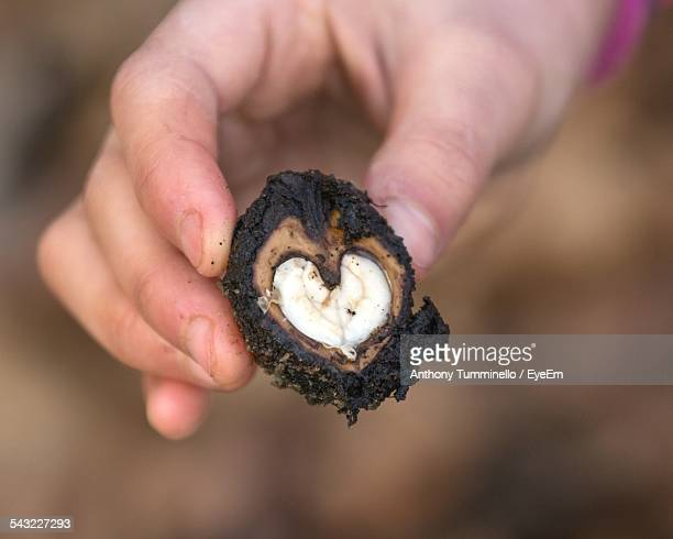 Cropped Hand Holding Heart Shape Water Chestnut