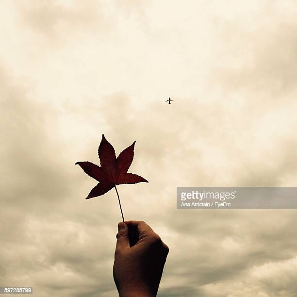 Cropped Hand Holding Maple Leaf Against Airplane In Cloudy Sky