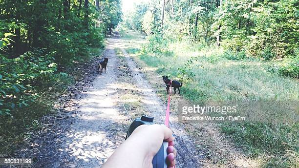 Cropped Hand Holding Pet Leash With Dogs Walking On Footpath In Forest