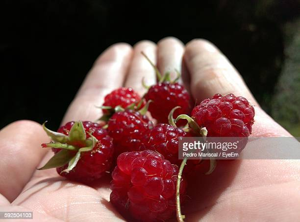 Cropped Hand Holding Raspberries