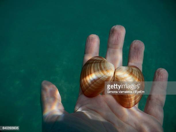 Cropped Hand Holding Shells In Water