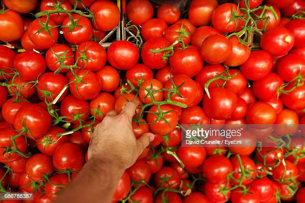 Cropped Hand Of Man Picking Tomatoes For Sale At Market