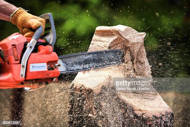 Cropped Hand Of Man Sawing Tree At Forest
