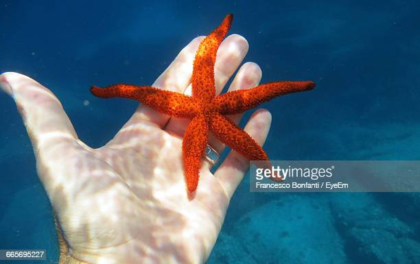 Cropped Hand Of Man With Starfish In Sea