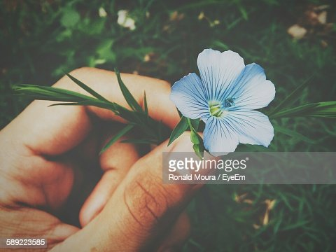 Cropped Hand Of Person Holding Blue Flower