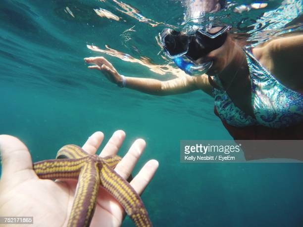 Cropped Hand Of Person Holding Starfish While Woman Snorkeling Undersea
