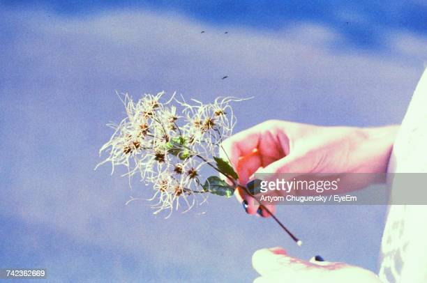Cropped Hand Of Woman Holding Dry Plant Outdoors
