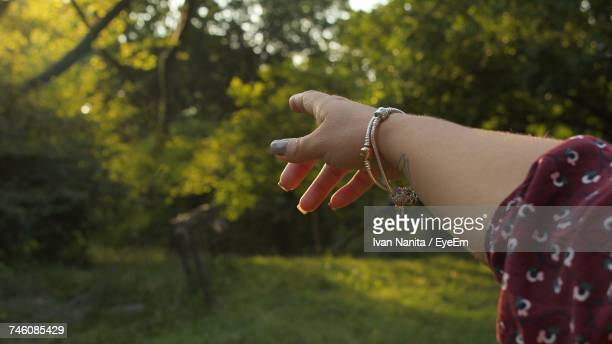 Cropped Hand Of Woman Pointing Towards Tree At Park