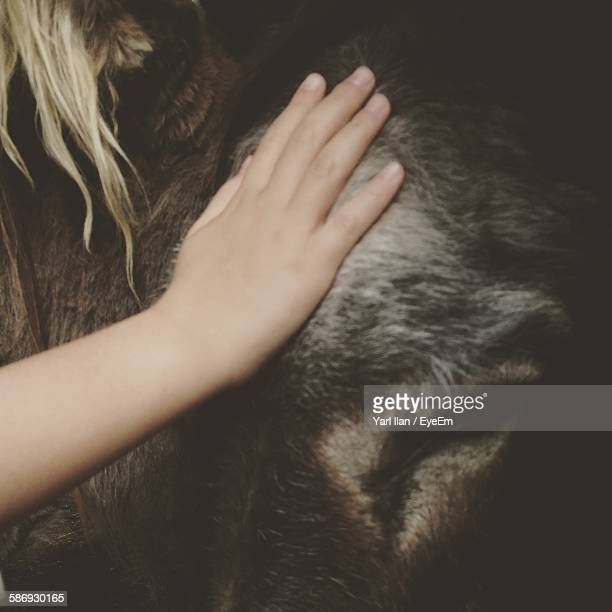 Cropped Hand Of Woman Stroking Donkey