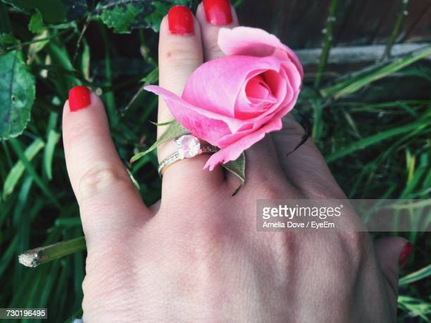 Cropped Hand Of Woman With Pink Rose