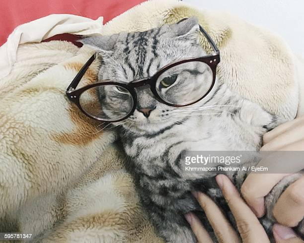Cropped Hands Of Person Stroking Cat In Eyeglasses