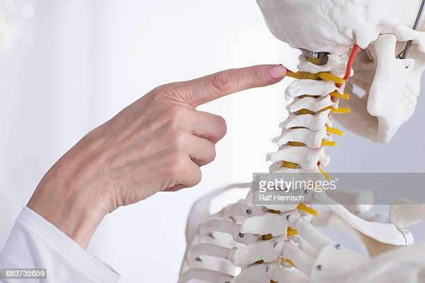 Cropped image of doctors hand pointing at skeleton while explaining anatomy