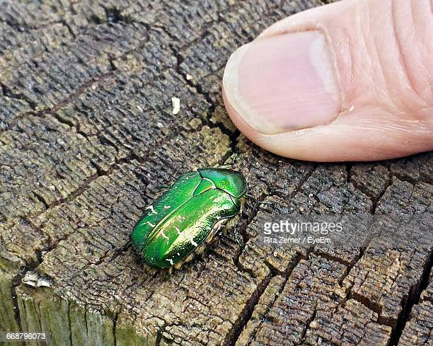 Cropped Image Of Finger By June Beetle On Wood