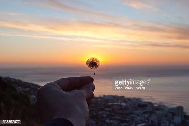 Cropped Image Of Hand Holding Dandelion On Beach Against Cloudy Sky During Sunset